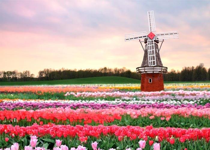 زندگی و تجصیل در هلند